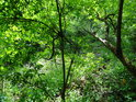 Prosluněná část malého údolí potoka na Kučích.