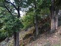 Západní svah s duby v Kůlnách.