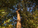 Ojedinělá pokřivená borovice.