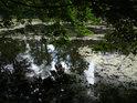 Dubové větve vrhají stín nad nehybnou vodu.