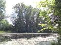 Je léto a žabinci se daří.