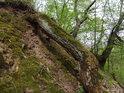Asi je to kořen, možná by to mohla být i větev.