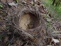 Spadlé ptačí hnízdo asi již osídlené nebude.