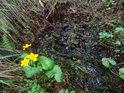 Maličká lesní tůňka se smrkovými šiškami a blatouchem.