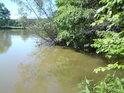 Potok Bačovka posiluje Labe zprava právě v Libickém luhu.
