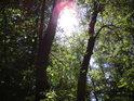 V některých místech se Slunce dostane i přes lužní listí.