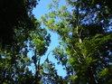 Krásná letní obloha doplňuje lužní zeleň.