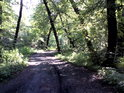 Cesta v severovýchodní části chráněného území.