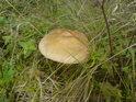 Když je mokro, tak se houbám daří.