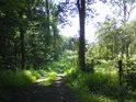 Lesní cesta od města Litovel Litovelskými luhy.