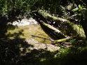 Úžasně čistá voda navzdory bahnu.