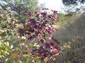 Listí již začíná být cítit podzimem.