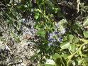 Vzhledem k relativní nehostinnosti tohoto kousku lomu, tu roste dost druhů rostlin.