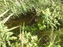 Jeníkovský potok je spíše potůčkem.