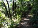 Úzká pěšina na kopec Lovoš.