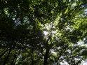 Listí stromů výborně chrání poutníky na kopec Lovoš před prudkým letním Sluncem.