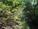 Husté křoví lemuje pěšinu na Lovoš.