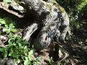 Stromy to mají s kořeny na kamenitých svazích náročné.