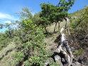 Pod vrcholem Lovoše je již vegetace řidší a menší.