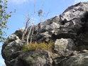 Žití stromů na skalách nebývá příliš dlouhé.