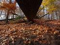Po vichřici tu zůstalo plno padlých buků, pod kmeny pak na podzim vznikají úžasné scenérie.