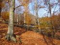 Bukový les ve svahu s mělkou brázdou v barvách podzimu.