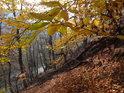 Bukové listy stejně jako uschlé padlé kmeny tvoří obraz východního svahu.
