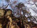Borovice a duby na skalách zachycené v době pokročilého podzimu.