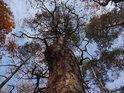 Pokřivená borovice vypovídá něco o podloží.
