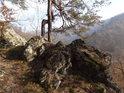 Přímá a křivá borovice na hraně skály nad řekou Svitavou.