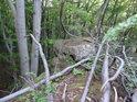 Zde nahoře je takový přístup, že tu vznikají pralesní scenérie.