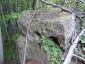 Buky prorůstají skrz kameny a kameny prorůstají skrz buky.