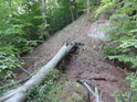 Lesní hřbet s padlým bukem.