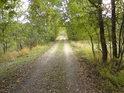 Pohled po cestě od lesa od severu do přírodní rezervace.