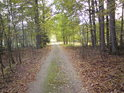 Cesta z lesa se v dáli rozplývá.