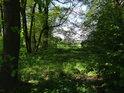 Průchod v lužním lesíku.