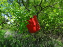 Červený kýbl v zeleném luhu.