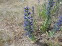 Rozmanitá květena na Malém Medláneckém kopci.