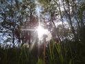 Sluneční paprsky olizují pampeliškové chmýří nad Medlovickým lomem.