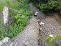 Stromy byly ponejprv vichrem zlomeny, pak pilou pořezány a nakonec zde zůstaly napospas svému osudu.
