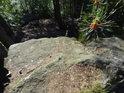Mladý borový výhonek nad skalou.
