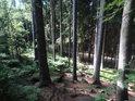 Sráz nad lesní cestou.