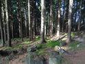 Smrkový les pod Milovskými Perníčky.