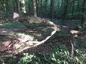 Ranní Slunce proniká do lesa na Mniší hoře.