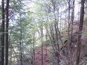 Jsme pod úrovní kořenů některých stromů a zase nad korunami jiných stromů.