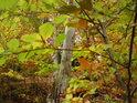 Podzimní bukové houští.