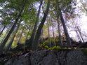 Takto to vypadá, jakoby buky rostly na skalních terasách.