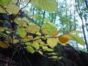 Podzimní detail z pod skály.