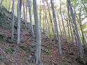 Buky v jižní části rezervace se dříve barví.