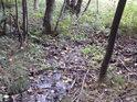 Spodní potůček sbírá všechny menší kratičké potůčky shora, aby jejich skromné vody předal Divoké Orlici u Vochtánky.